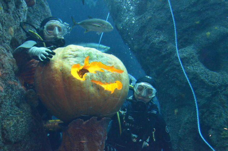 Coupons for sc aquarium