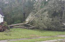 Pictured: Down tree in homeowner's yard in Goose Creek (Via Nikki Gaskins)